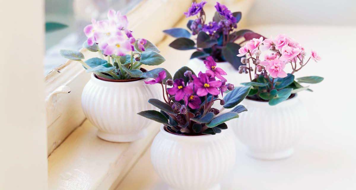 Ce plante rezista iarna in apartament?