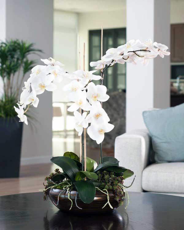 Orhideele aduc noroc casei tale si sunt usor de intretinut iarna